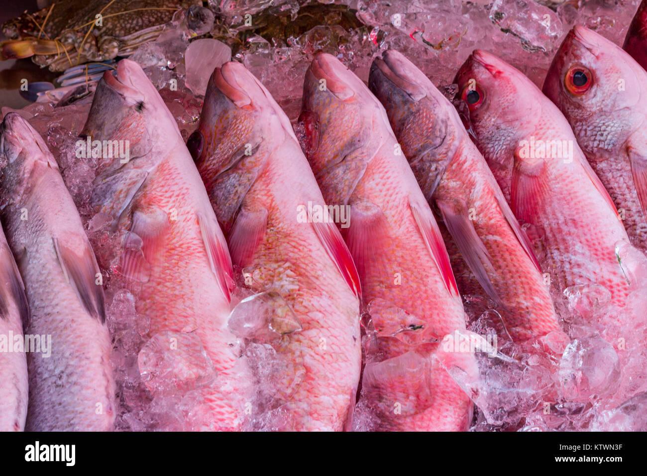Red snapper fish on ice, fish market, Rawai, Phuket, Thailand Stock Photo