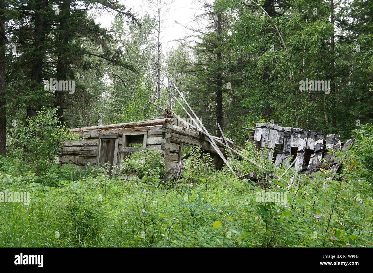 Quesnel Forks, a ghosttown along the Cariboo Wagon Road  in British Columbia. - Stock Image