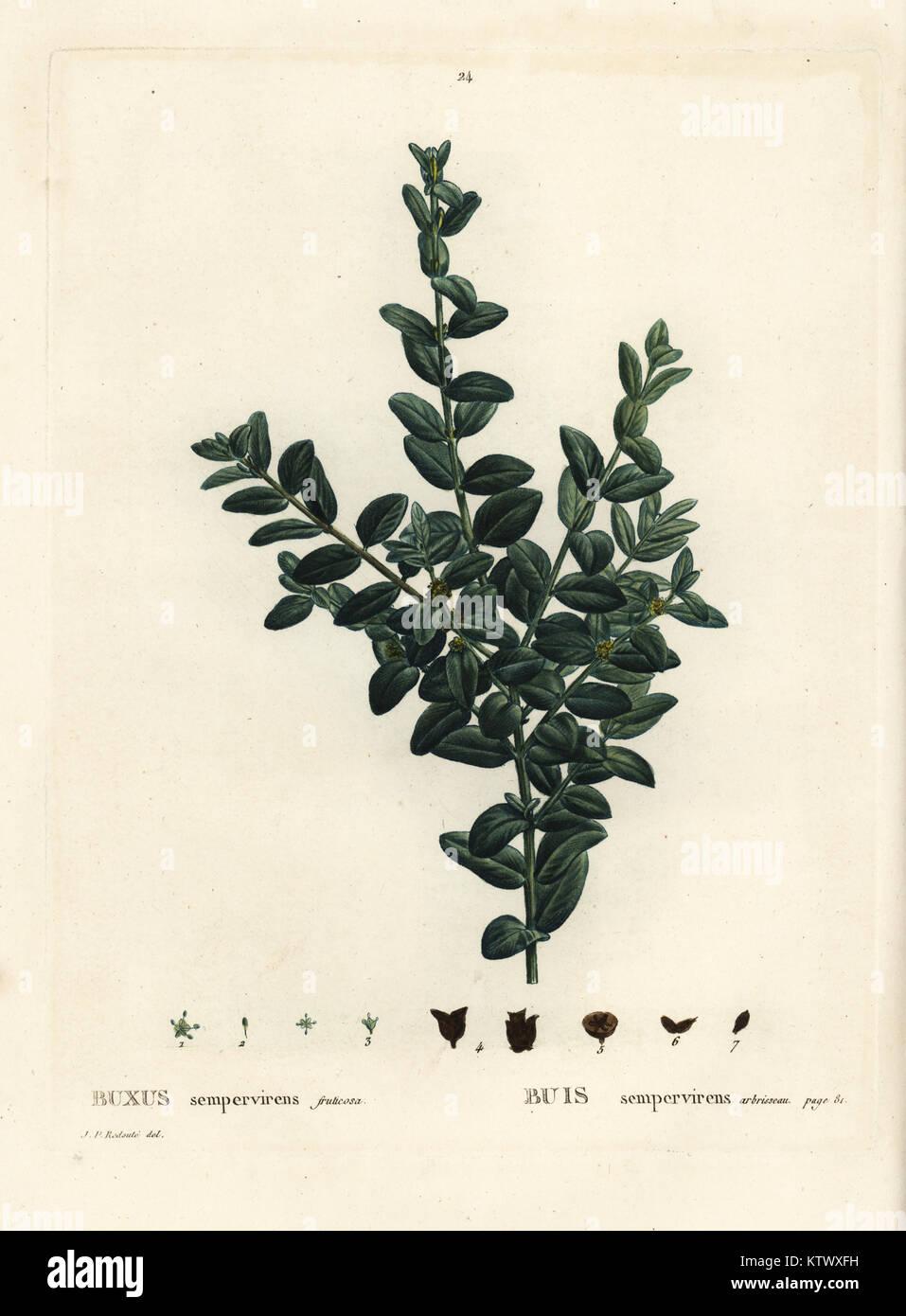 Buxus tinder dating