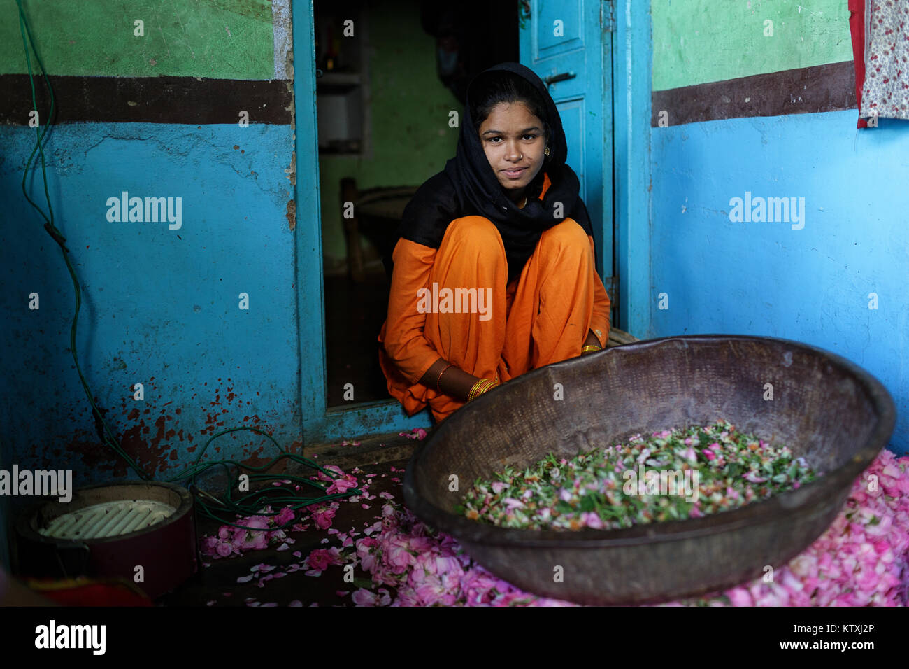 Shy young indian girl in orange traditional dress with hair covered with black shawl picking rose petals in her - Stock Image