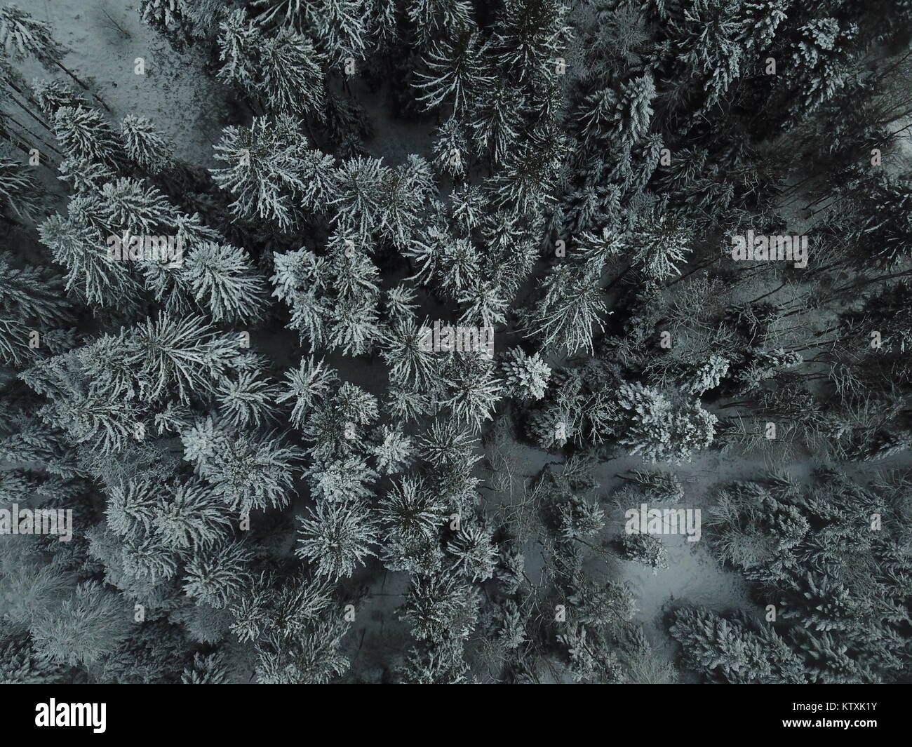 Trees from by drone in winter time - Stock Image