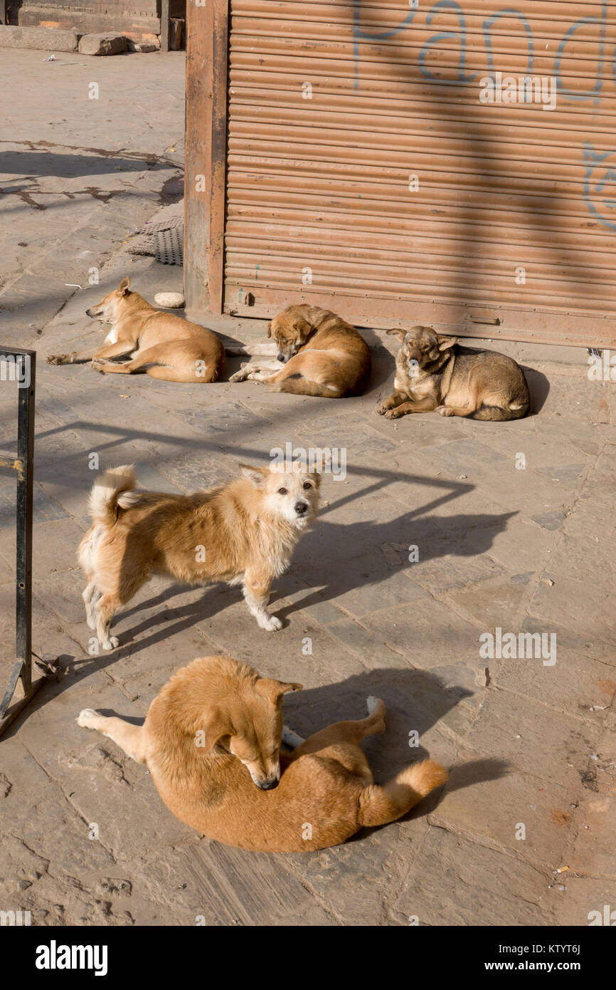 Street dogs snoozing in the sun in Kathmandu, Nepal - Stock Image