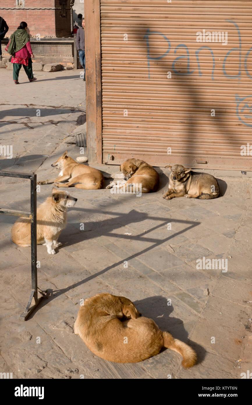 Street dogs snoozing in the sun in Kathmandu, Nepal - Stock Image
