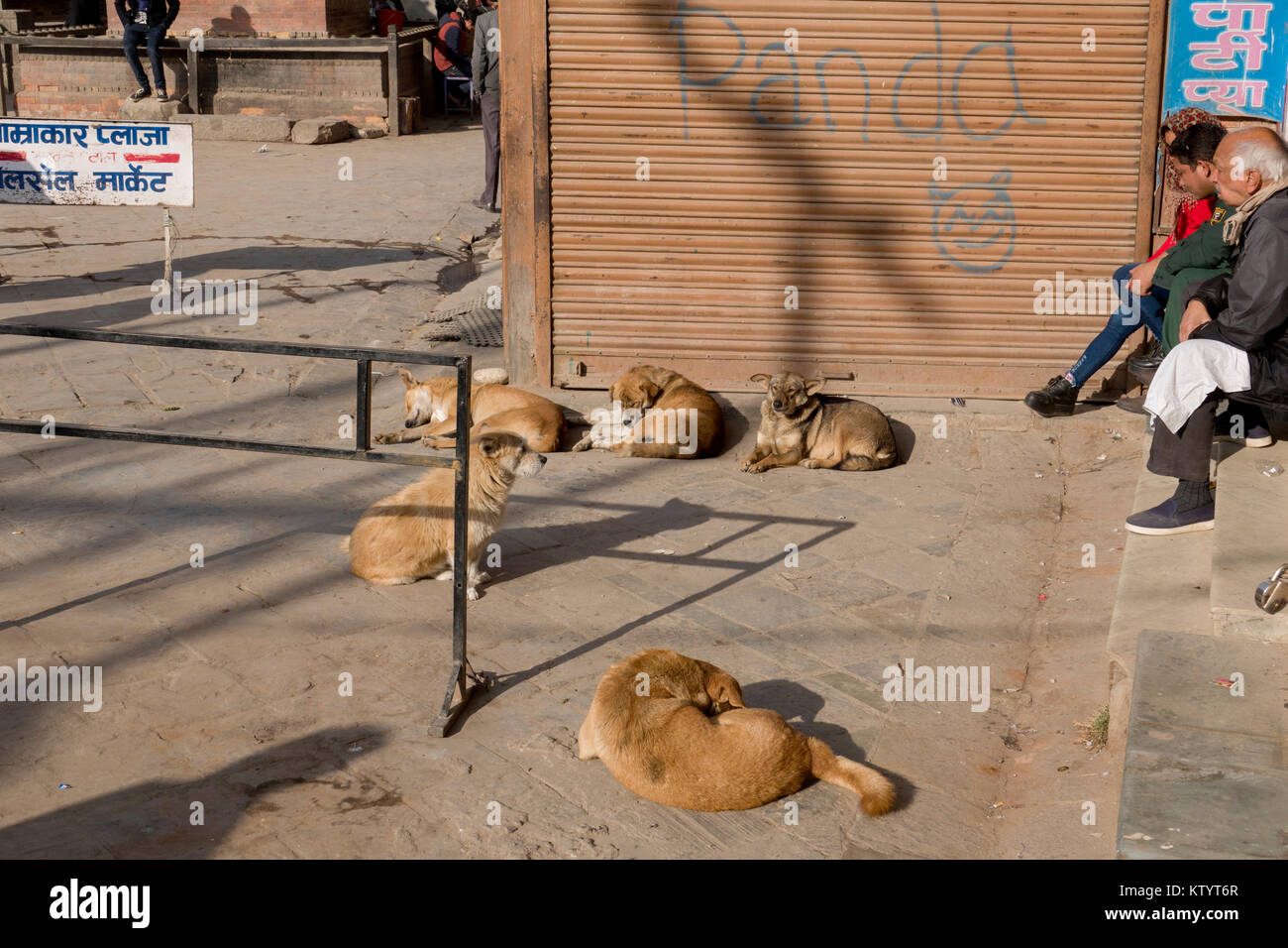 Street dogs snoozing in the sun in Kathmandu, Nepal Stock Photo