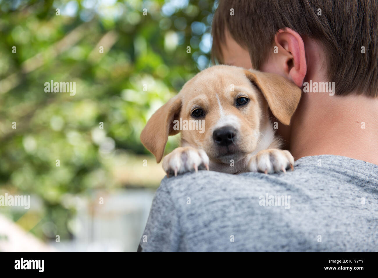 Tiny Little Puppy Being Held in Arms - Stock Image
