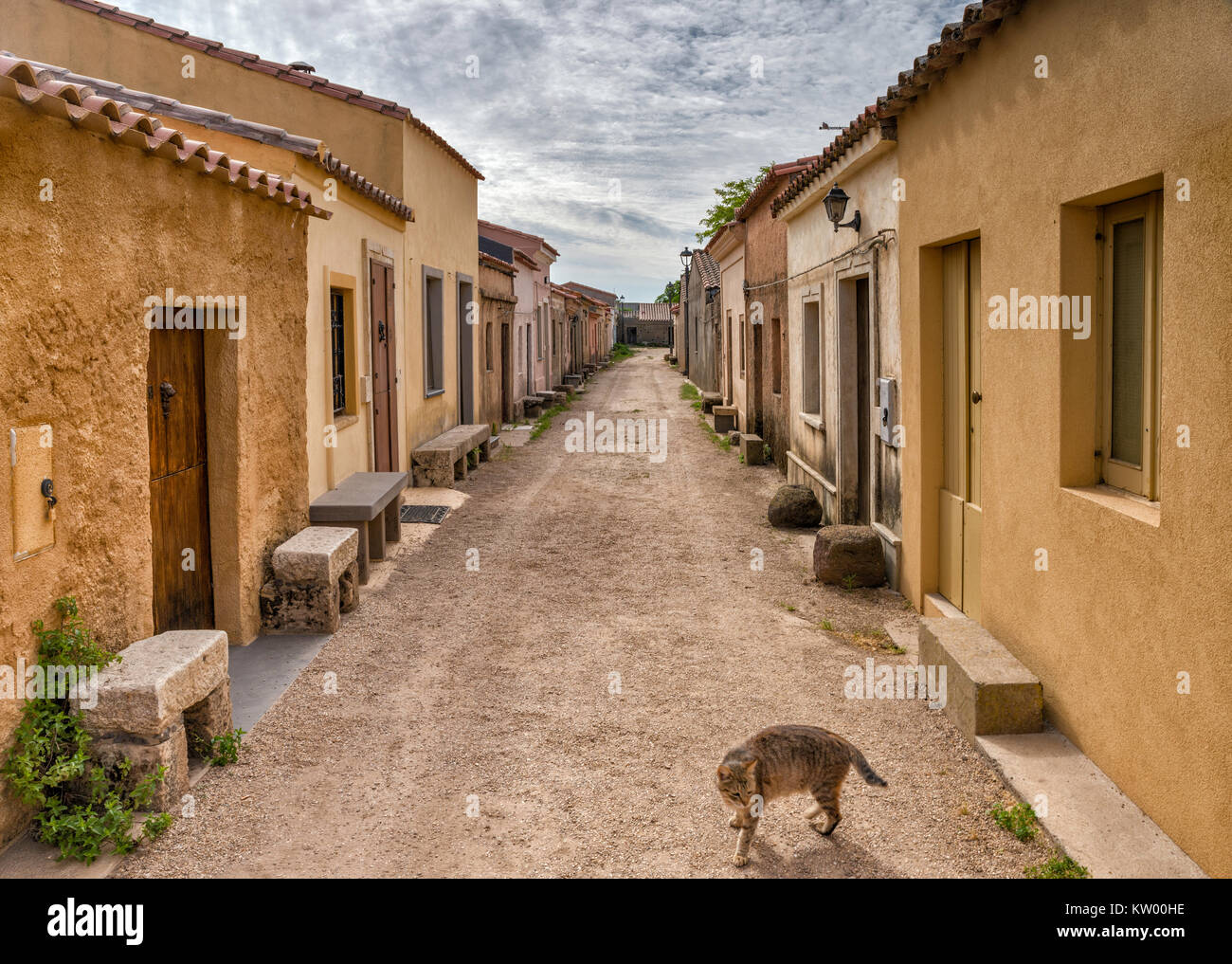 Lonely cat at street in a village, deserted most of the year, of San Salvatore, Sinis Peninsula, municipality of - Stock Image