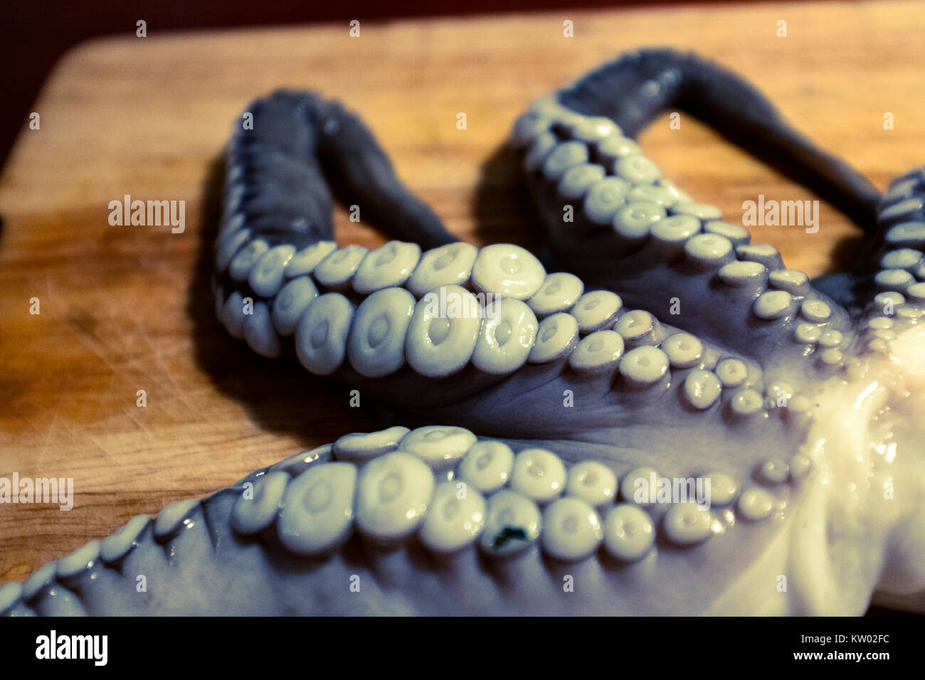 Cross-processed picture of an octopus - Stock Image