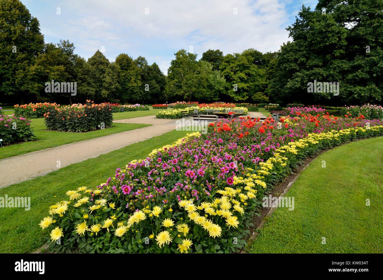 Dresden, Dahlia garden in the big garden, Dahliengarten im  Großen Garten - Stock Image
