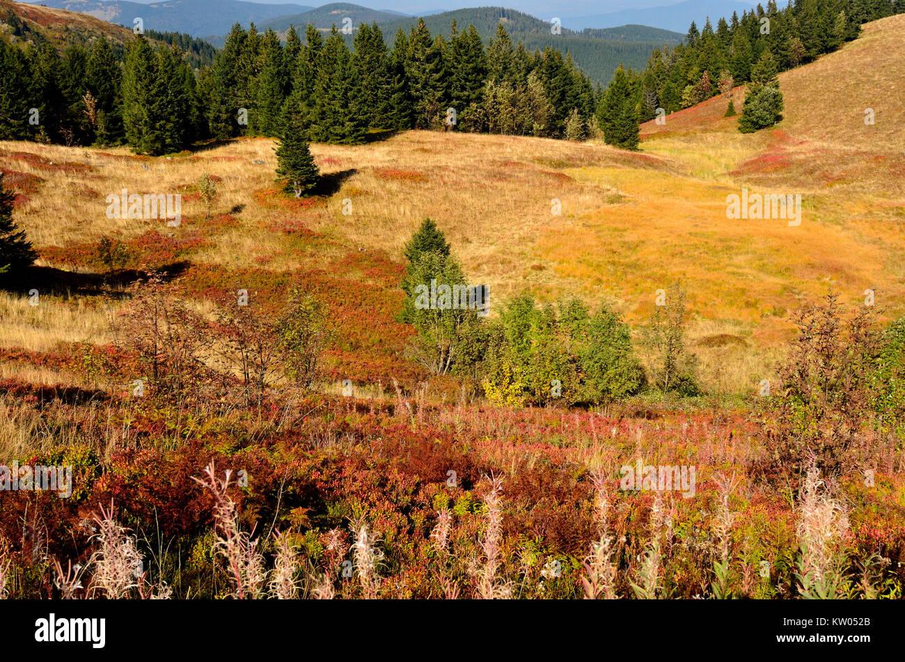 Black Forest, field mountain, autumnal vegetation in the summit area, Schwarzwald, Feldberg, herbstliche Vegetation im Gipfelbereich Stock Photo