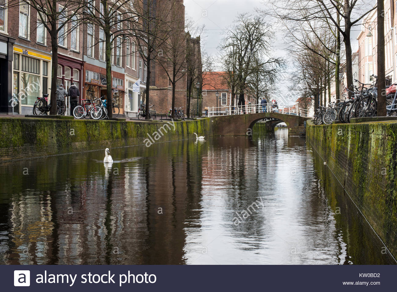 Photograph of a canal with swans in Delft Netherlands. - Stock Image