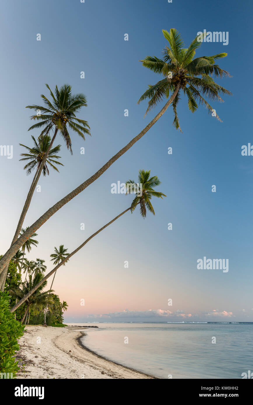 Beach with palm trees, Cook Islands - Stock Image