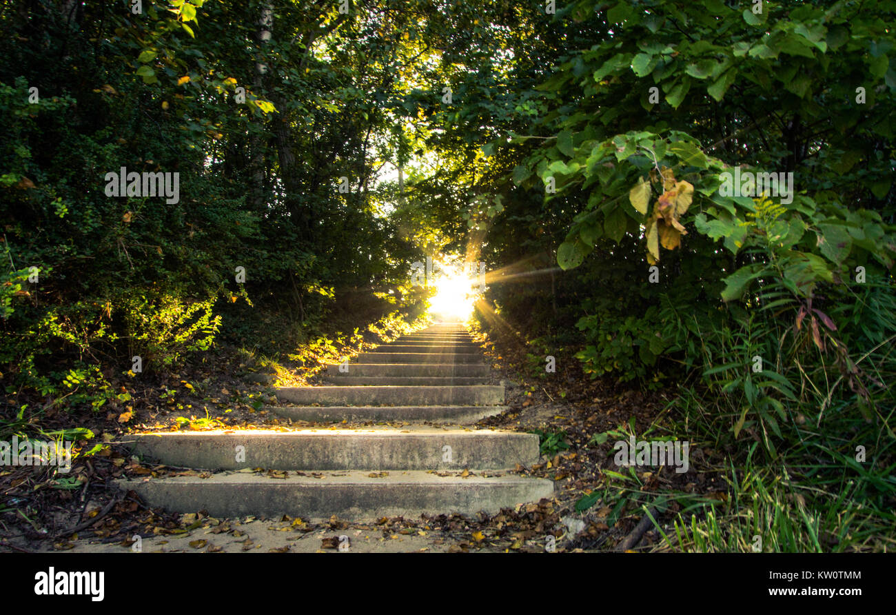 Light Of Heaven. Sunlight streams down a stairway that travels up through a scenic forest. - Stock Image