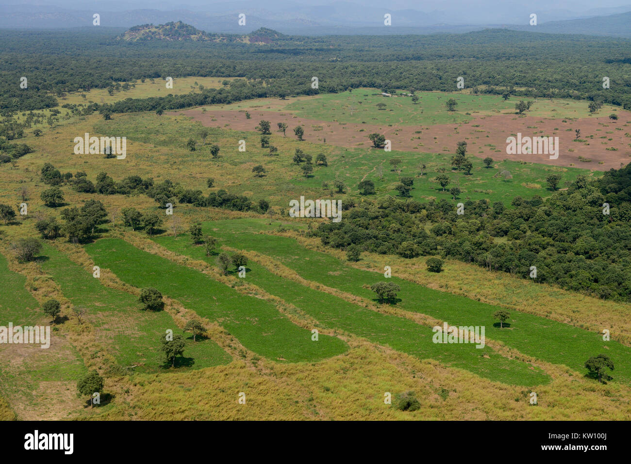 ETHIOPIA, Gambela, the government give large land for cheap lease to domestic and foreign investors, after deforestation Stock Photo