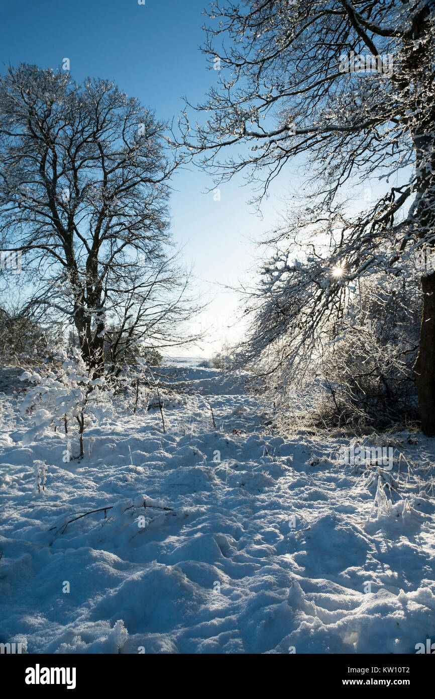 Snow covered woodland near Forth in Lanarkshire, Scotland - Stock Image