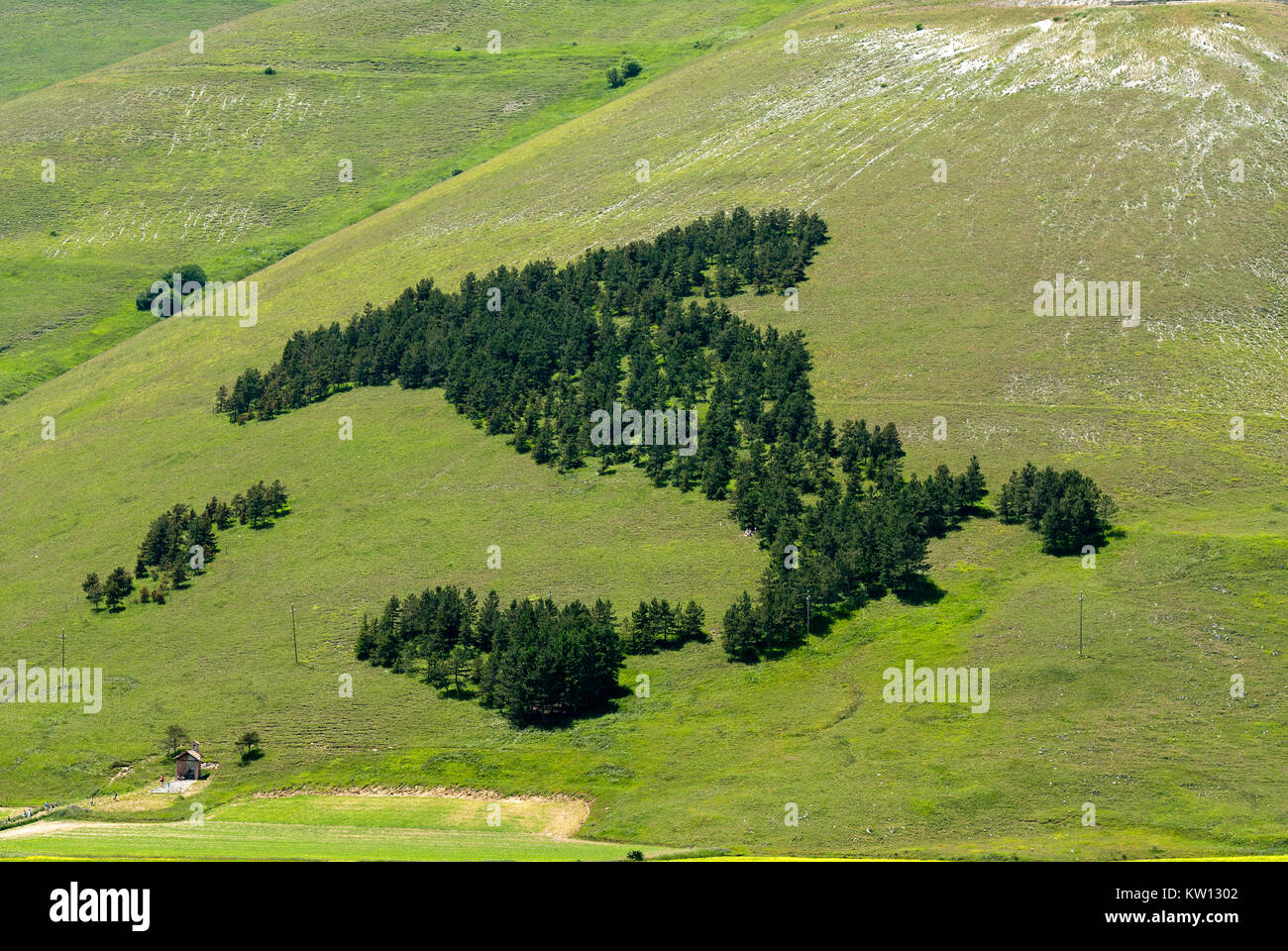 Wood shaped as Italy in castelluccio di Norcia, Sibillini Mountains National Park, Umbria, Italy - Stock Image