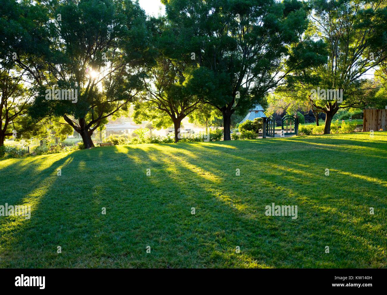 At Heather Farms Park, a public park in the San Francisco Bay Area, morning sunlight filters through trees and illuminates - Stock Image