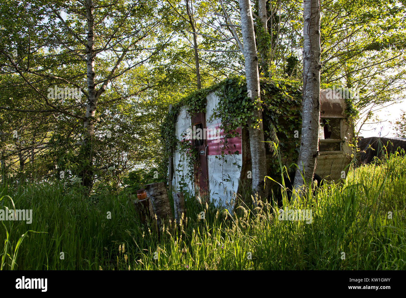 Vintage Travel Trailer  Tour-A-Home, resting under a grove of Alder trees, shows many years of use, dating back - Stock Image