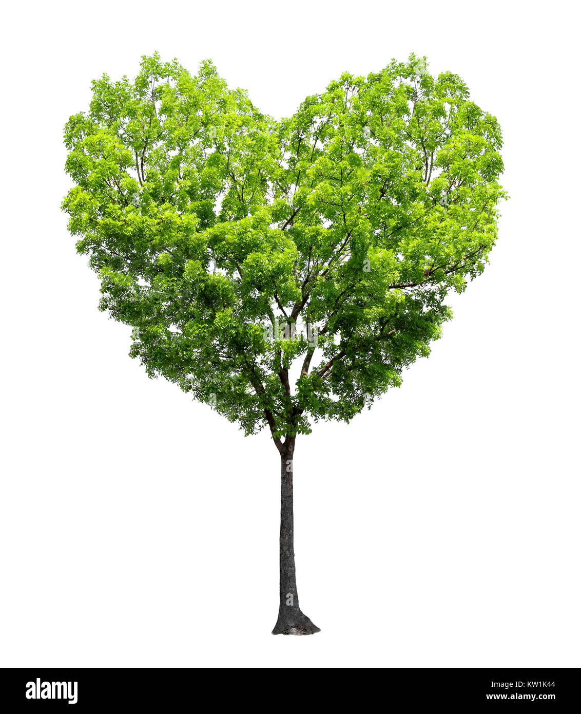 Heart shape tree - Stock Image