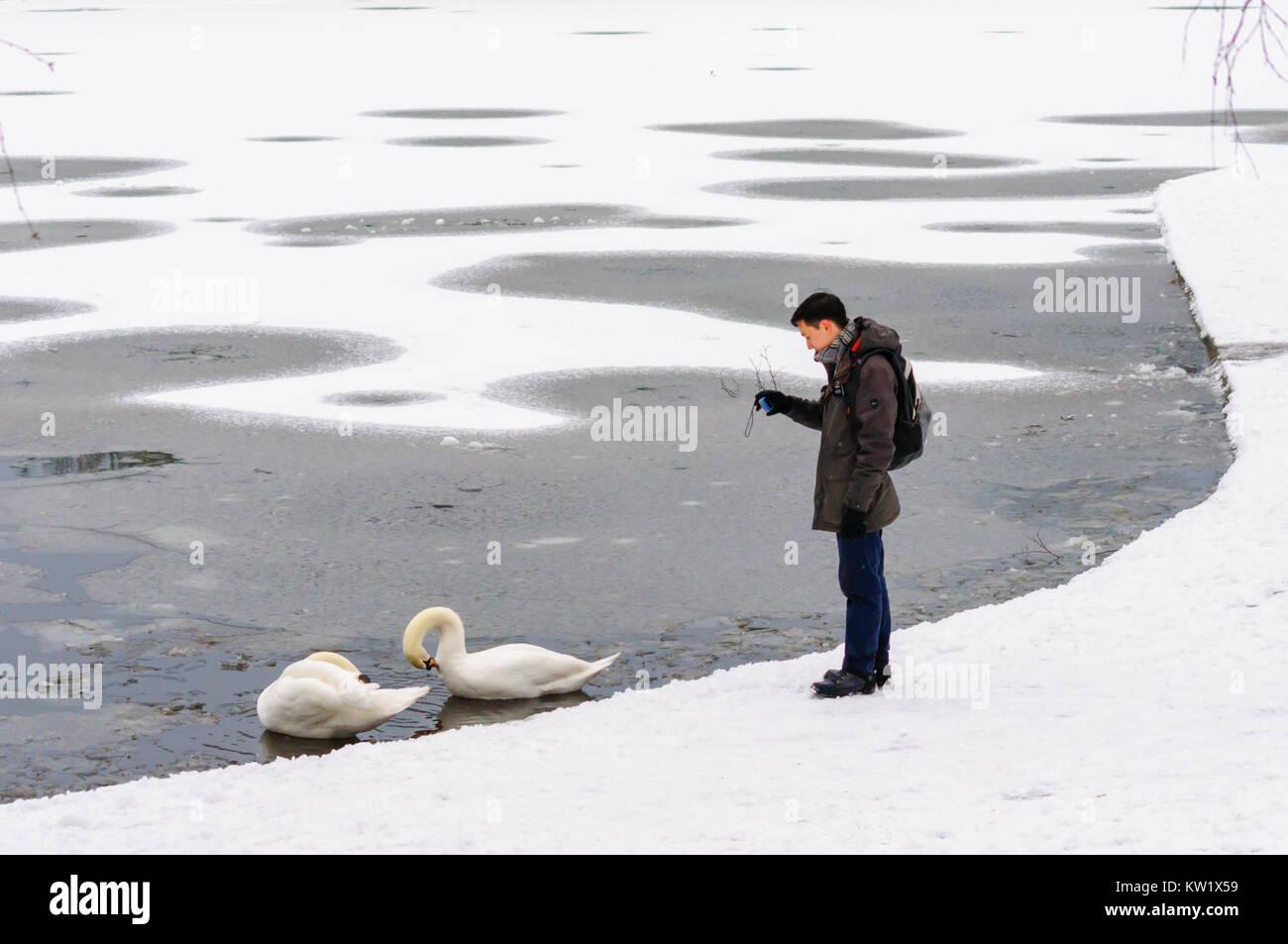 swans snow scotland stock photos  u0026 swans snow scotland