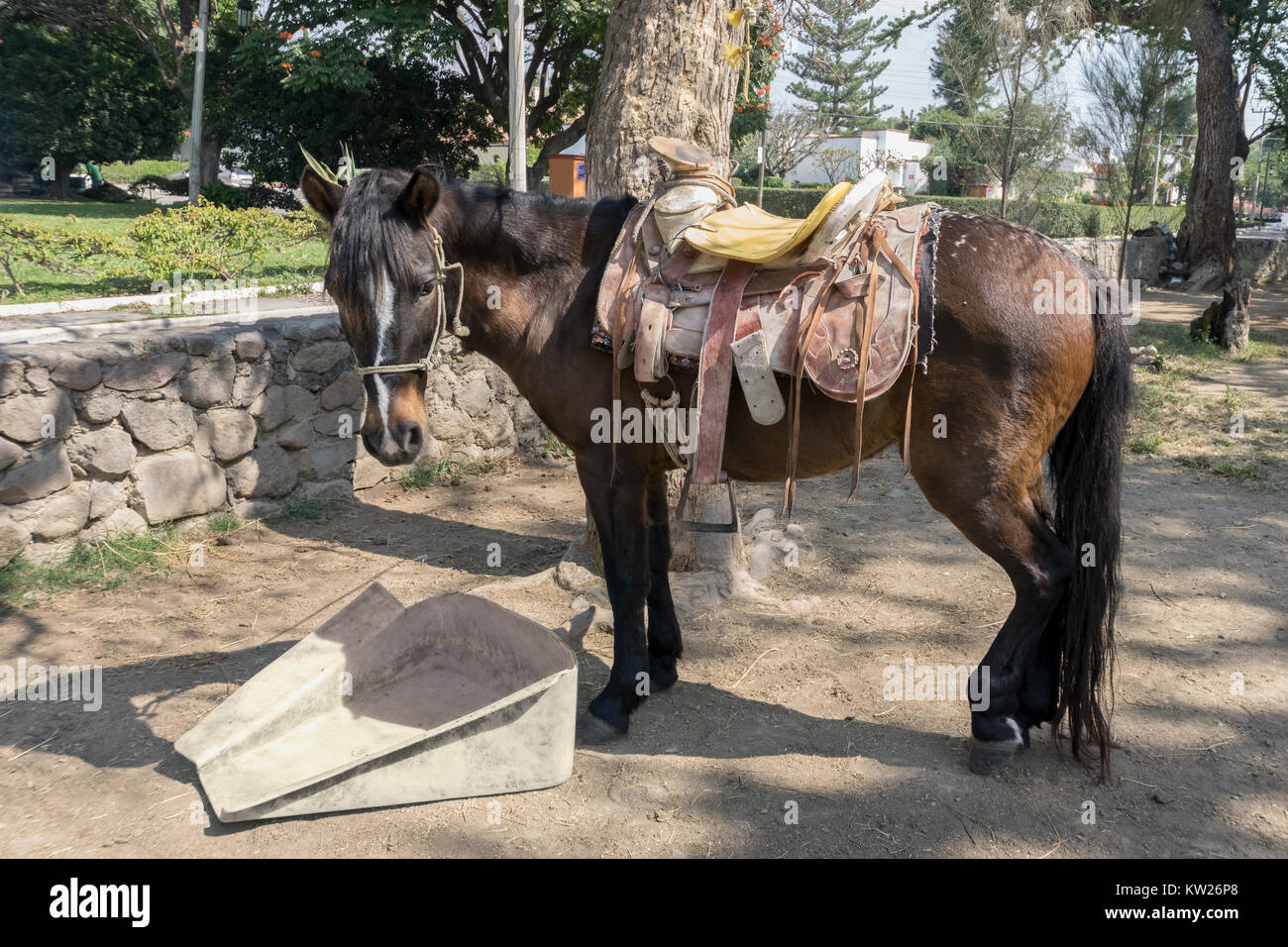 Mexican Saddle High Resolution Stock Photography And Images Alamy