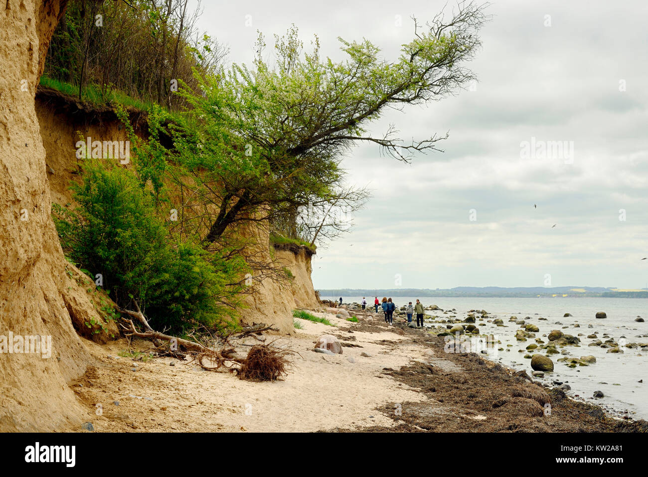 Baltic island Poel, Steilk?ste near village Timmen beach, Ostseeinsel Poel, Steilküste bei Timmendorf Strand - Stock Image
