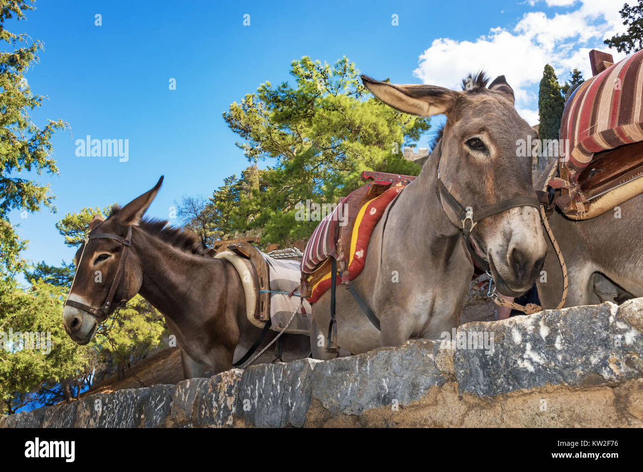 Donkey taxi – donkeys used to carry tourists to Acropolis of Lindos (Rhodes, Greece) - Stock Image