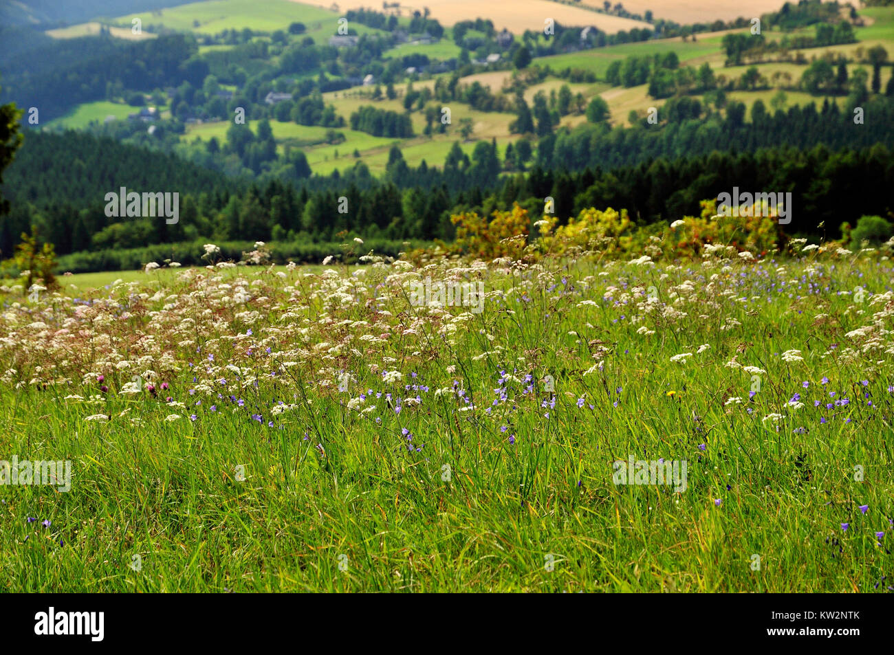 Arch mountain meadow with Seyde, Osterzgebirge, Erzgebirgswiese bei Seyde - Stock Image