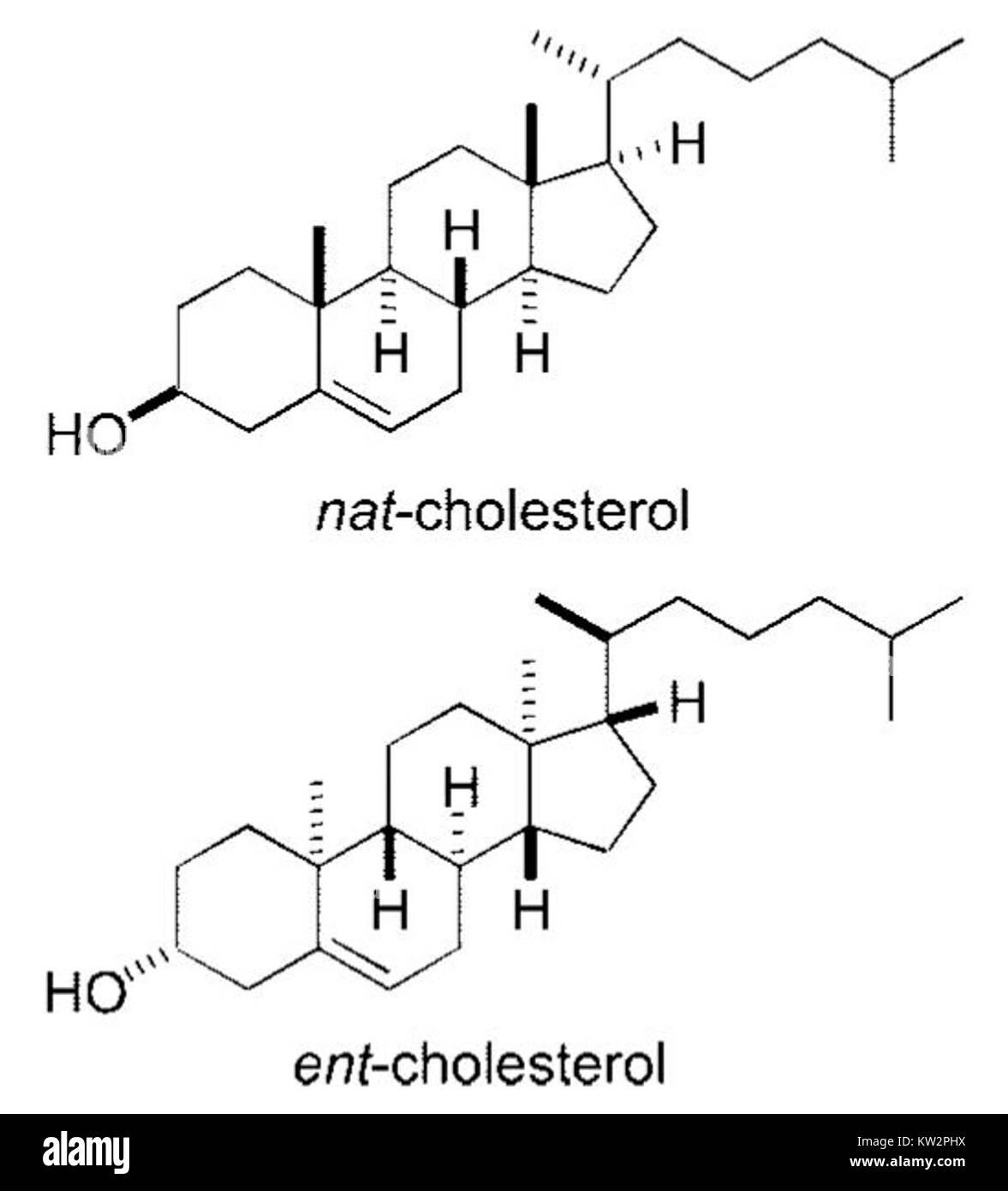 Nat cholesterol and ent cholesterol - Stock Image