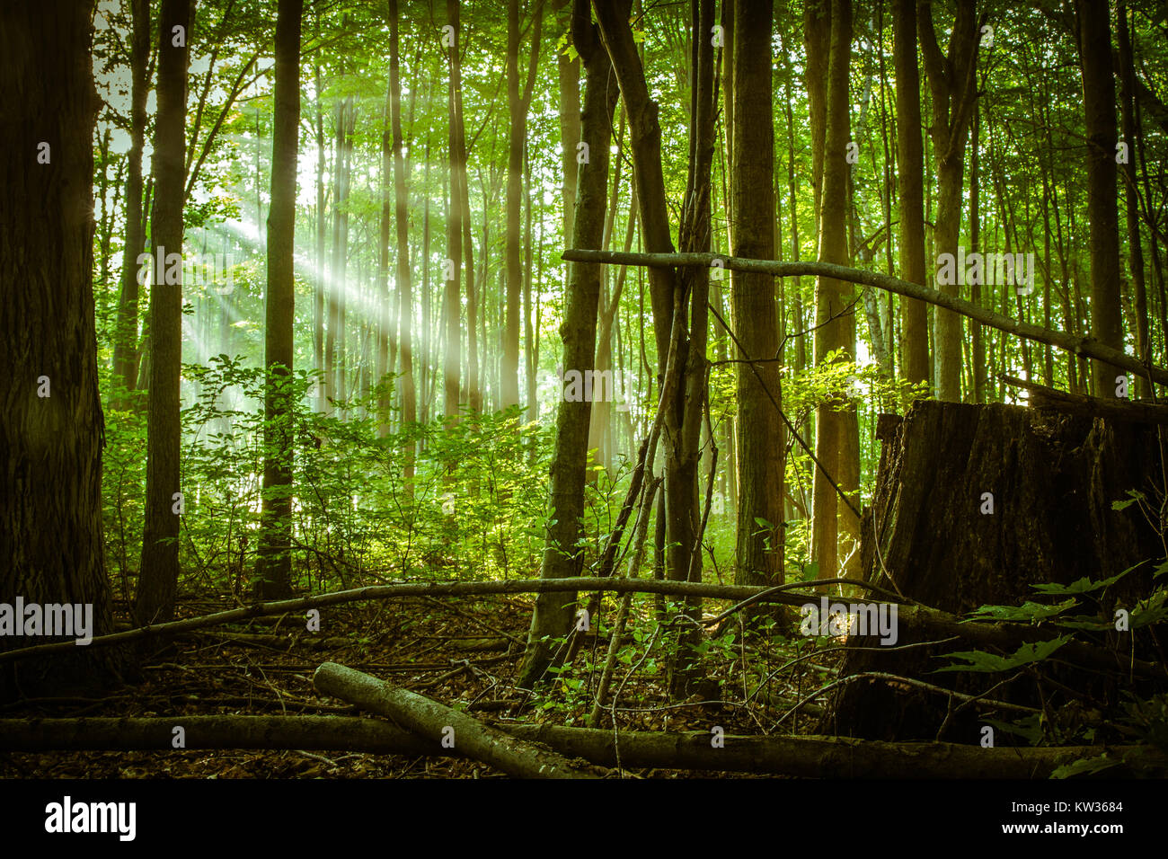 enchanted forest background.html