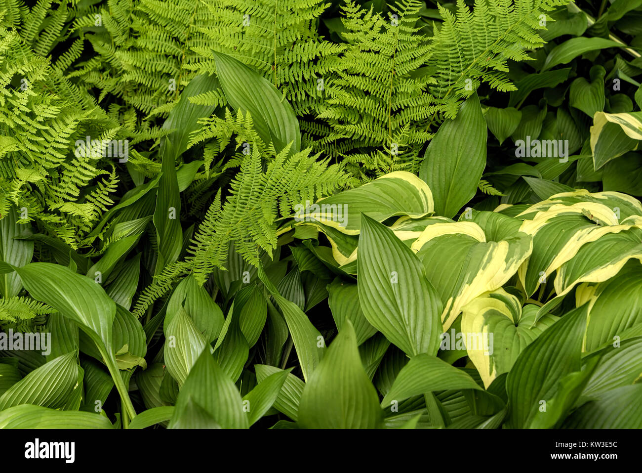 Closeup of large, small, wide and long green leaves - Stock Image
