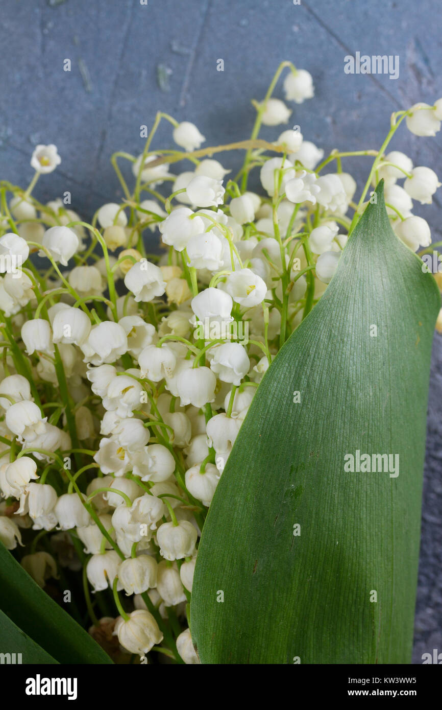 Lilly of the valley flowers stock photo 170345873 alamy lilly of the valley flowers izmirmasajfo