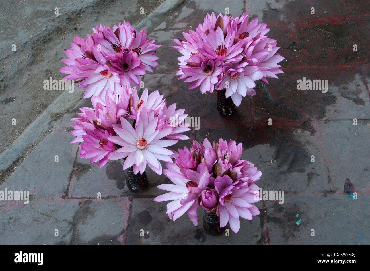 Lotus flowers for sale stock photos lotus flowers for sale stock bodhgaya the town where the buddha sat under a sacred fig tree izmirmasajfo
