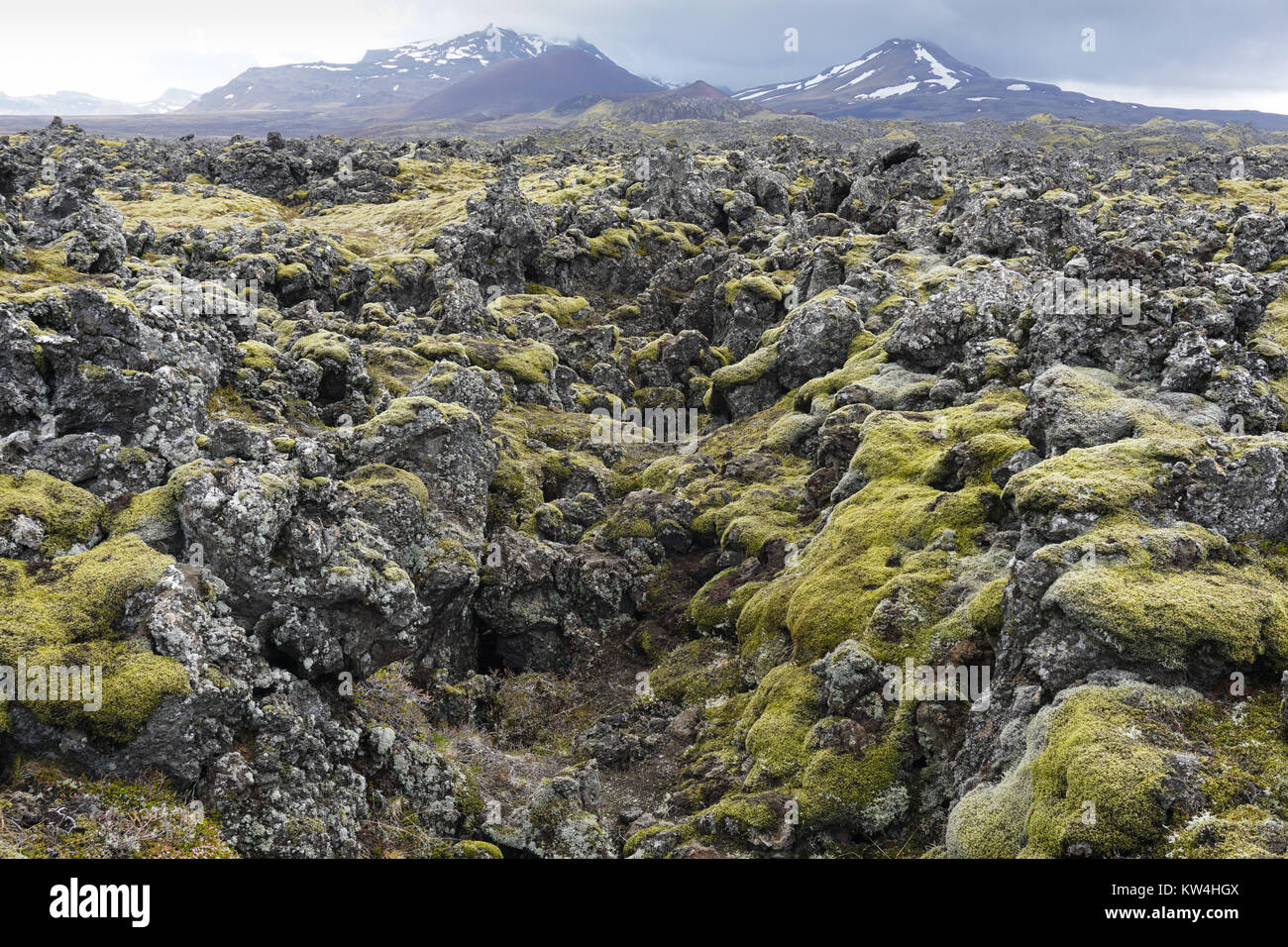 Moss covering the Berserkjahraun lava field between Stykkishólmur and Grundarfjörður in West Iceland. Stock Photo