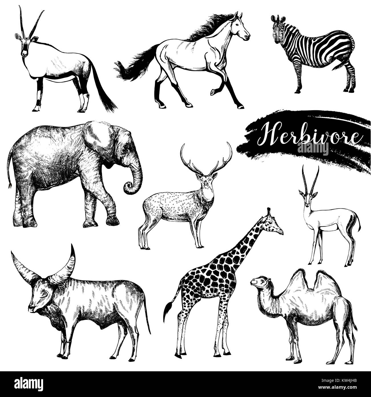 Set of sketch style hand drawn herbivore animals. Vector illustration isolated on white background. - Stock Vector