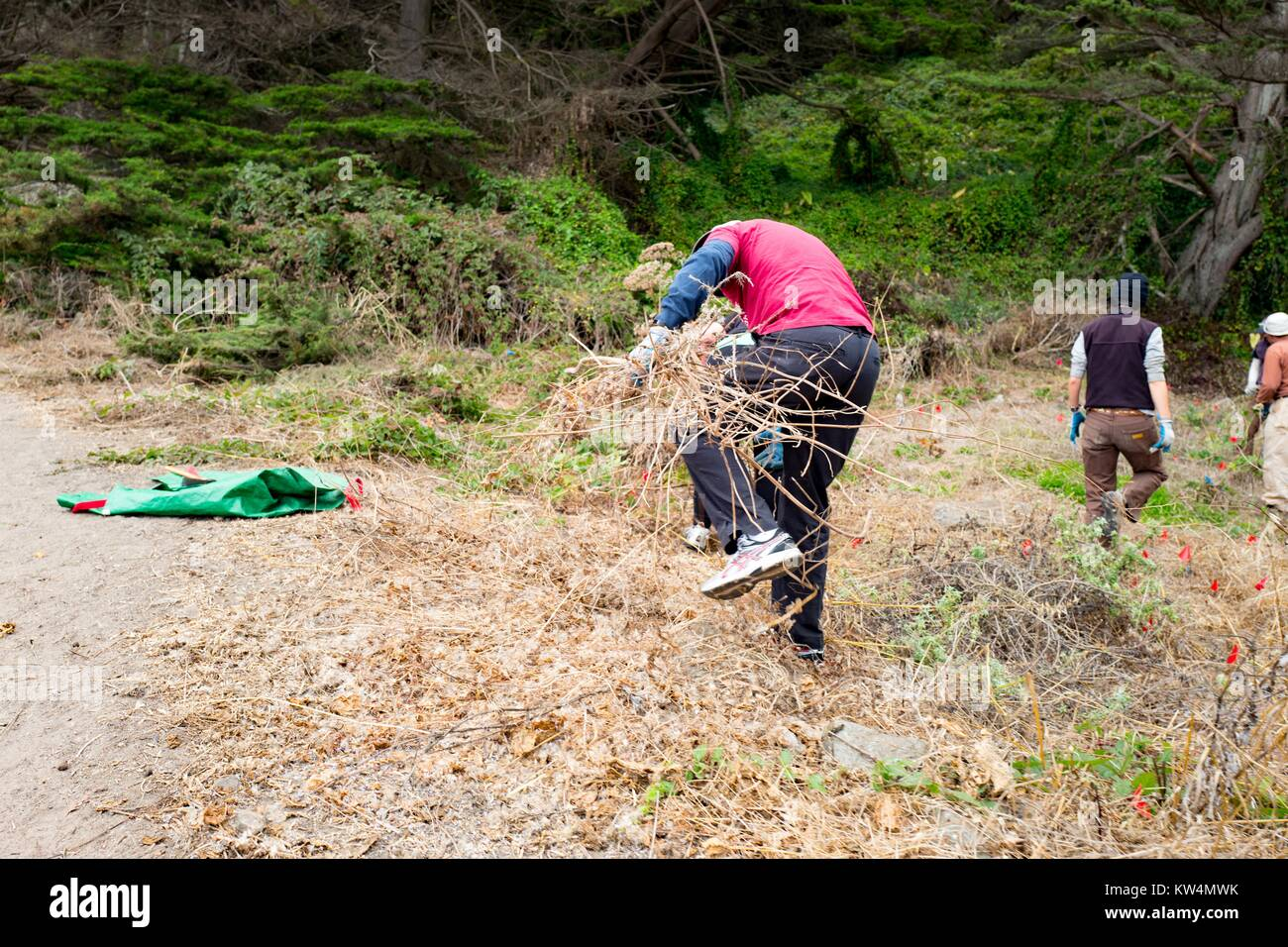 Volunteers perform trail cleanup along Coastal Trail in the Lands End neighborhood of San Francisco, California, - Stock Image