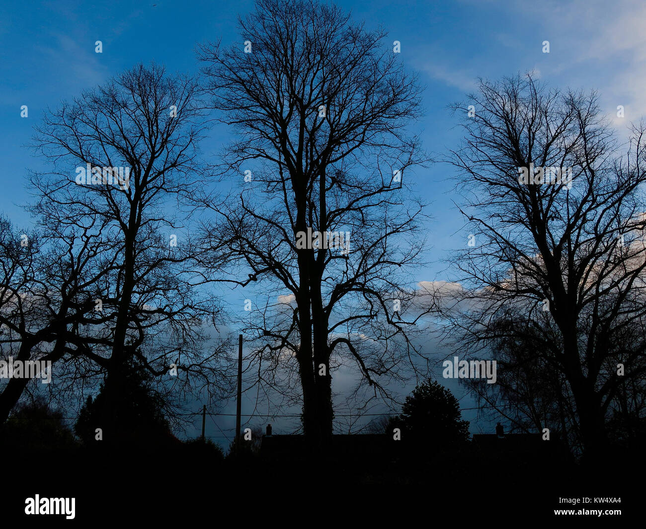 Winter trees in fading afternoon light. Salhouse, Norfolk, December 2017. - Stock Image
