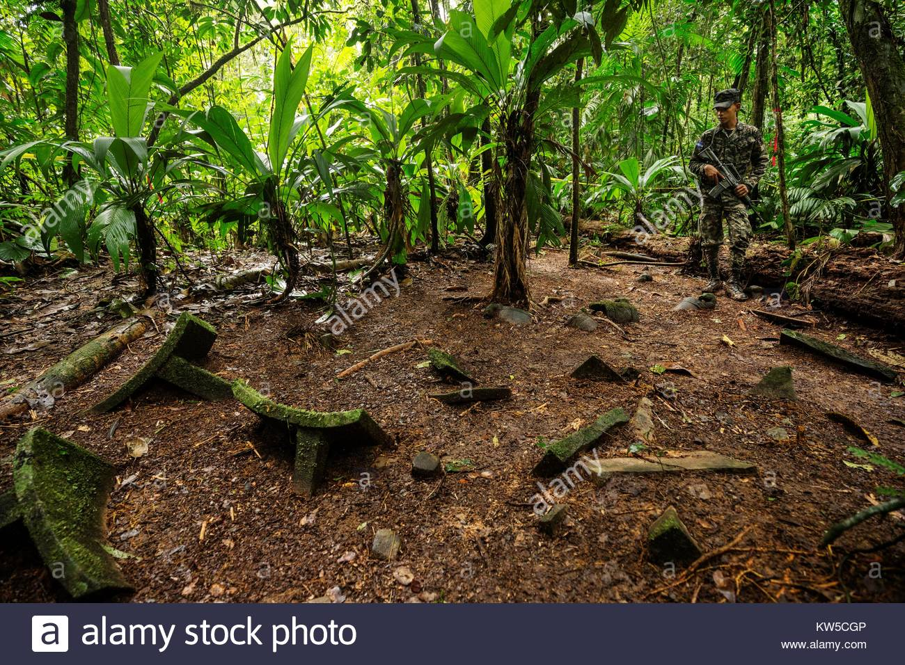 Unexcavated artifacts on the jungle floor in the Mosquitia jungle in Honduras. - Stock Image
