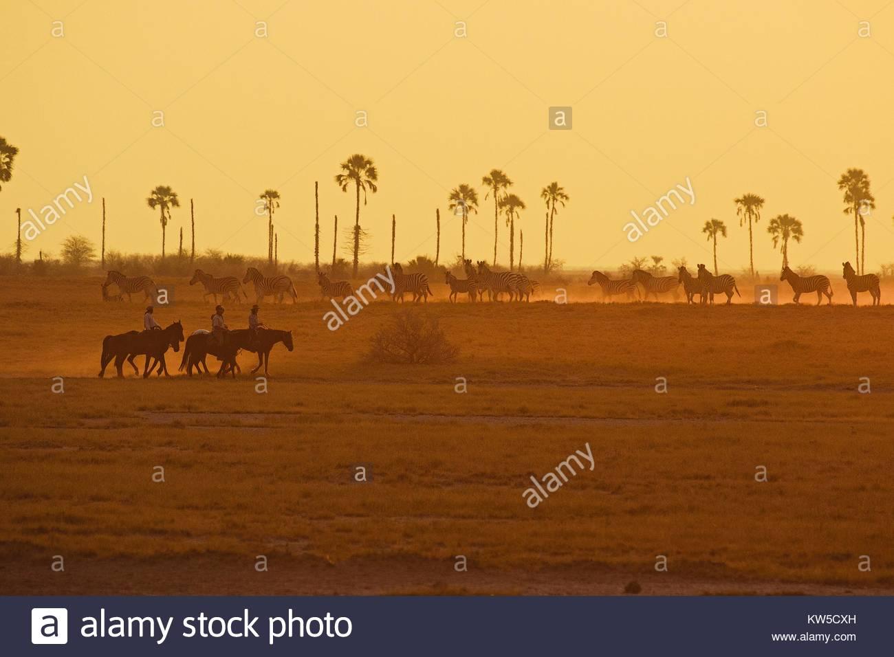 Horseback riders pass a group of zebras on the Makgadikgadi salt pans. - Stock Image