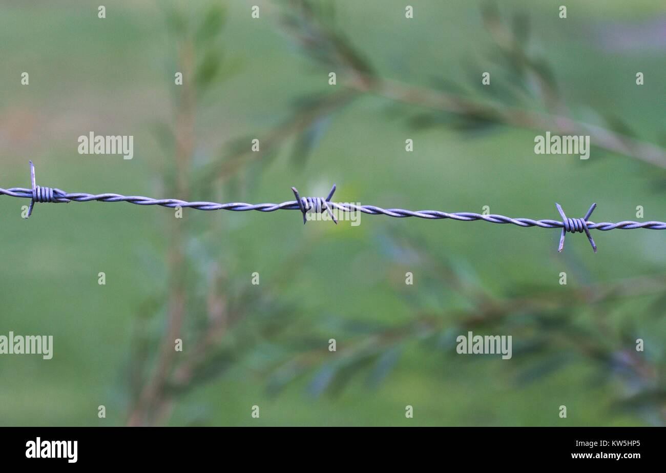 Close up of a strand of barbed wire, against a nature background. Stock Photo