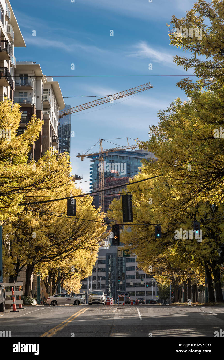 New buildings seen through autumn leaves on trees, Seattle, Washington, USA - Stock Image