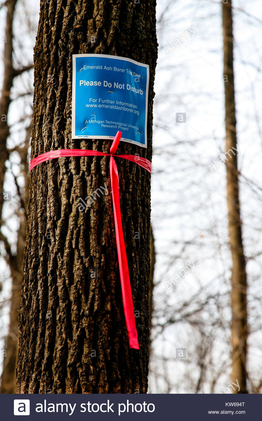 Emerald Ash borer test and research project within the Pike Lake Unit, Kettle Moraine State Forest, Hartford, Wisconsin - Stock Image