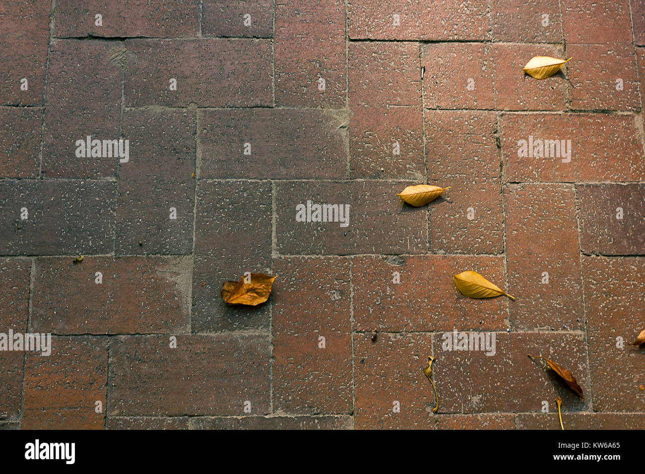 leaves on brick in fall - Stock Image