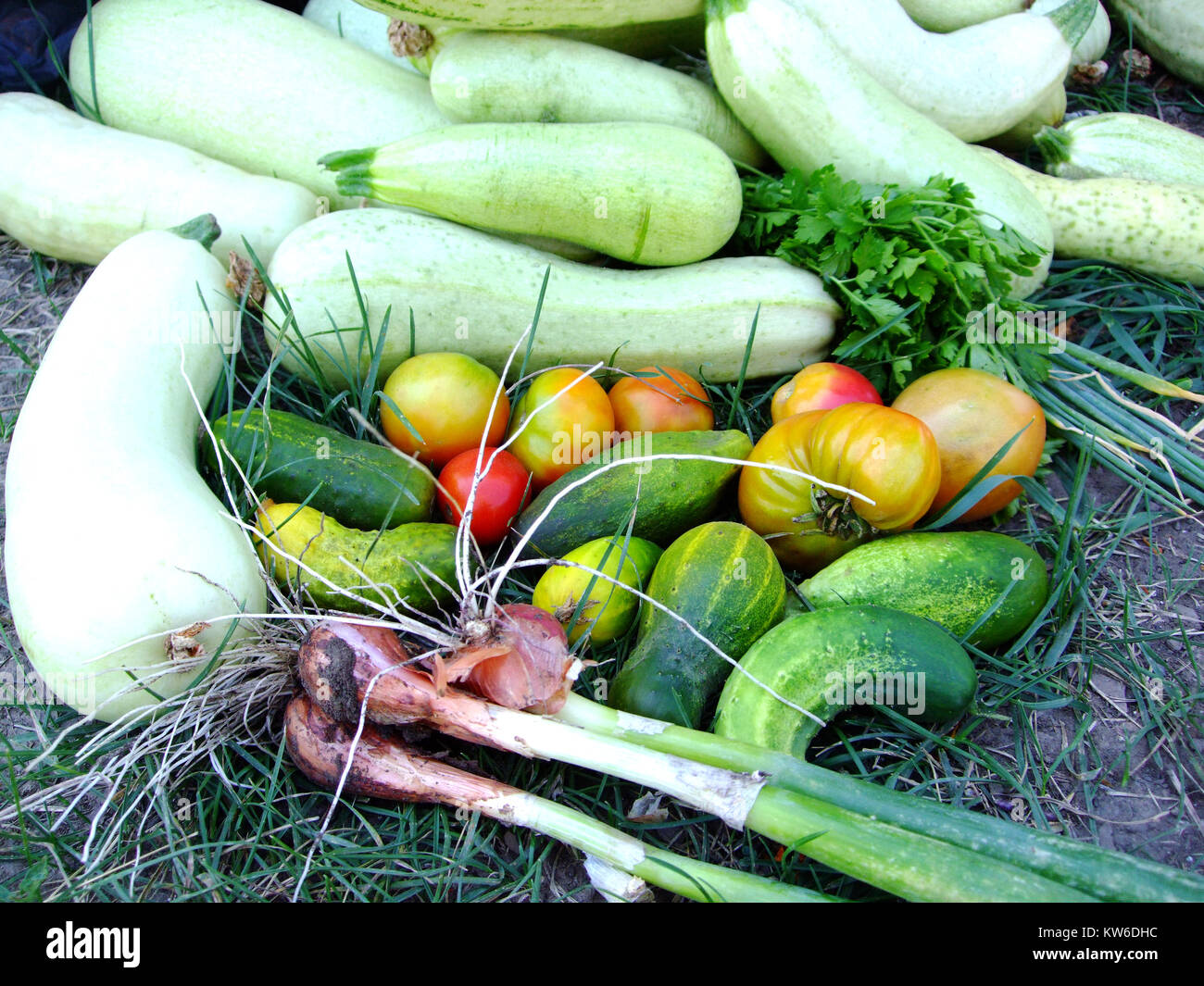 Vegetables from the garden - cucumder, tomato, bows, zucchini. - Stock Image