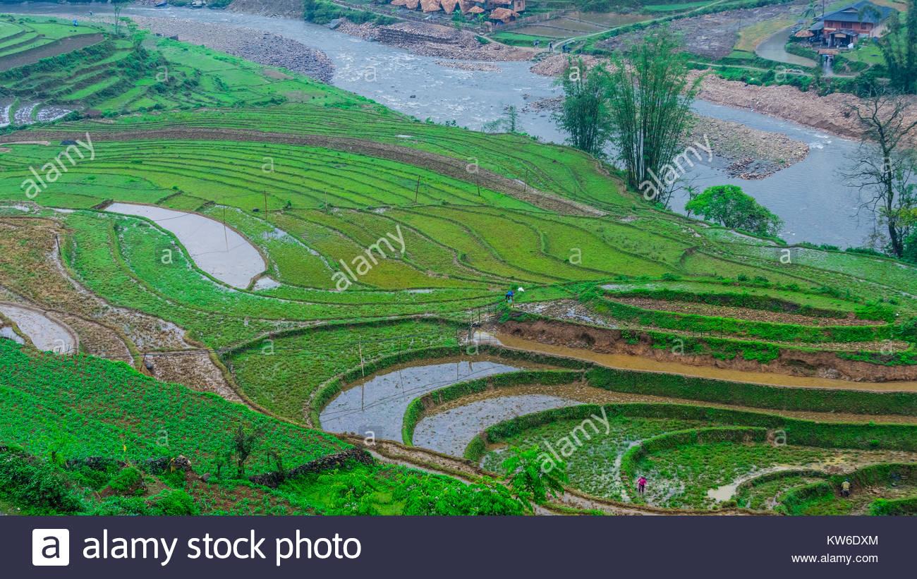 Terraced rice fields, Muong Hoa Valley, near Sapa, northern Vietnam. - Stock Image