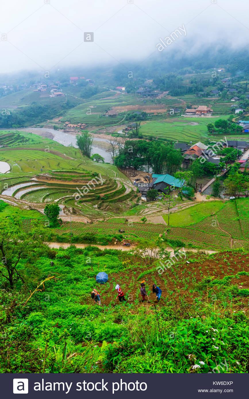 Farming, Muong Hoa Valley, near Sapa, northern Vietnam. - Stock Image
