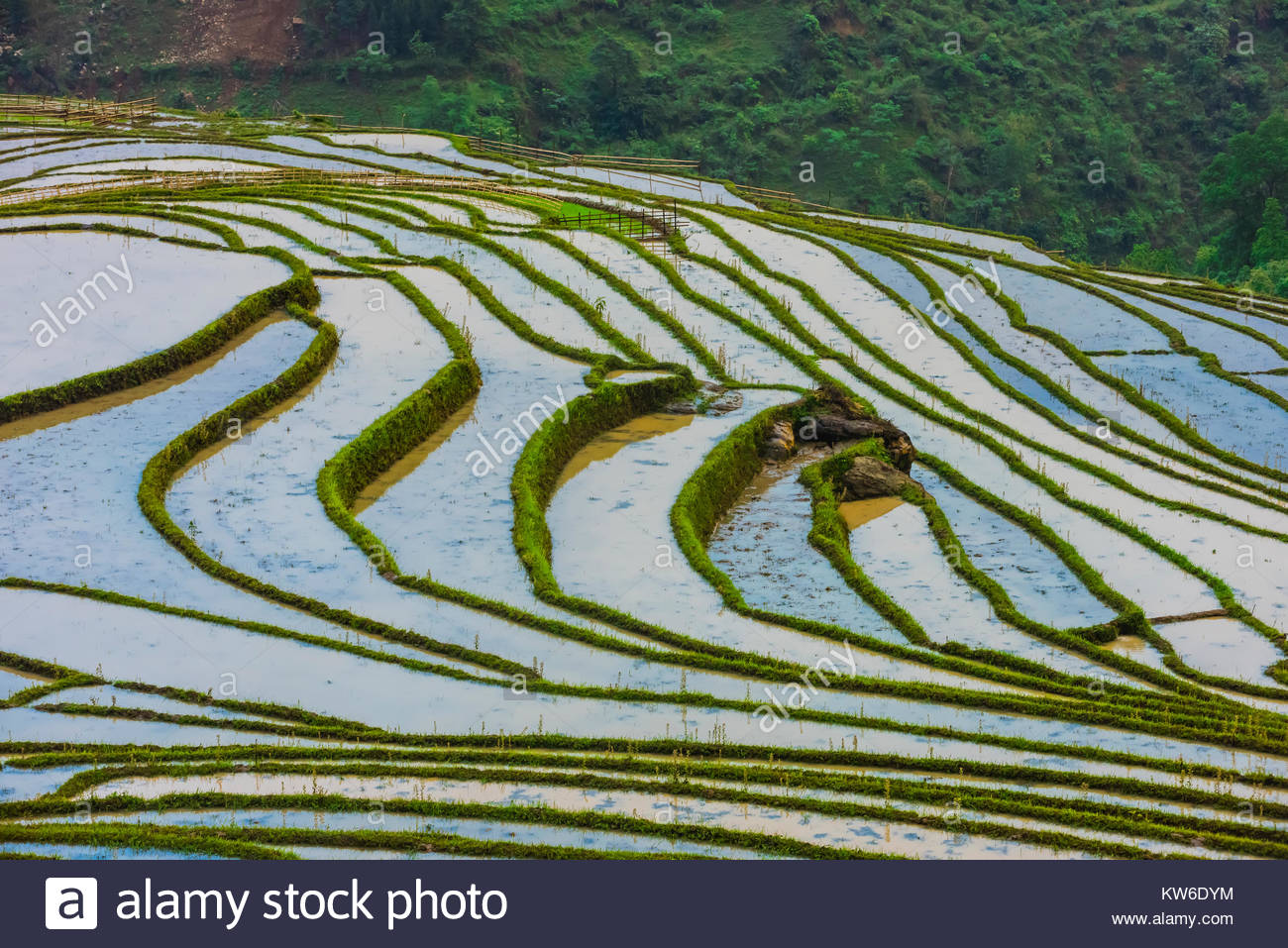 Intricate patterns of the rice terraces in the Muong Hoa Valley near Sapa, Vietnam. - Stock Image