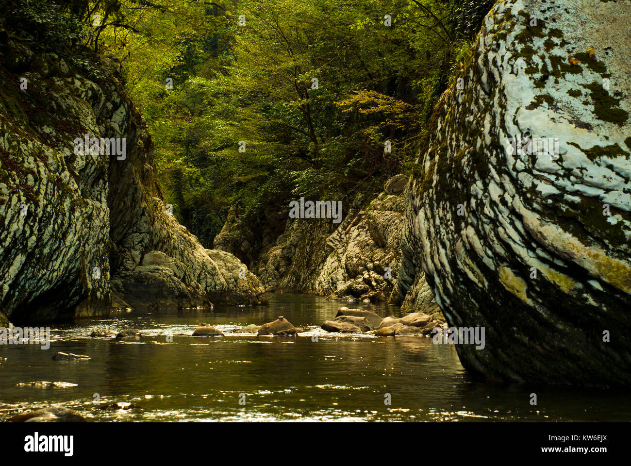 beautiful shady river gorge in a mountain forest with green gleams from the water on the rocks - Stock Image