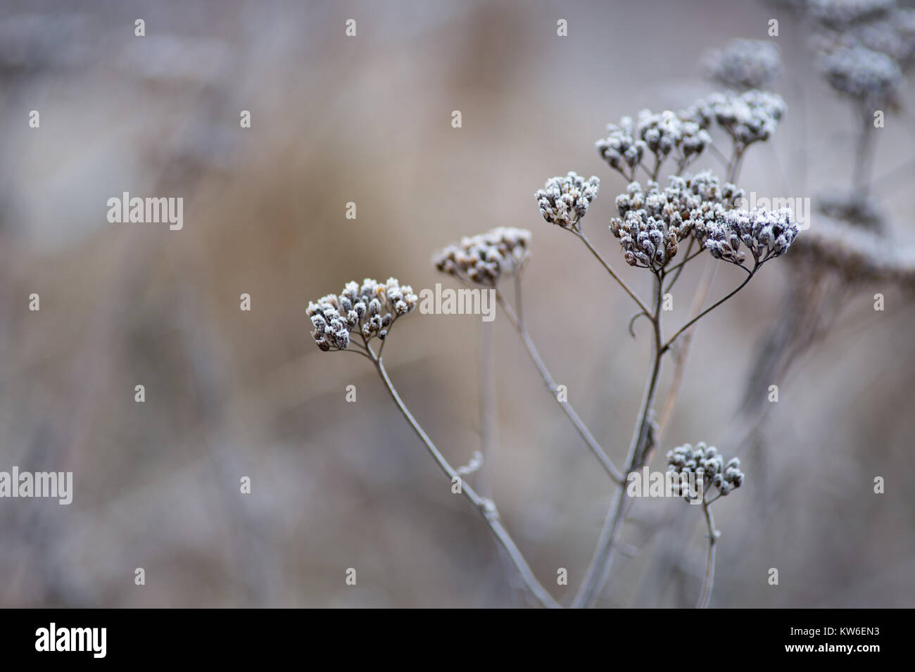 Winter seed headin a wintry Swedish forest. Stock Photo