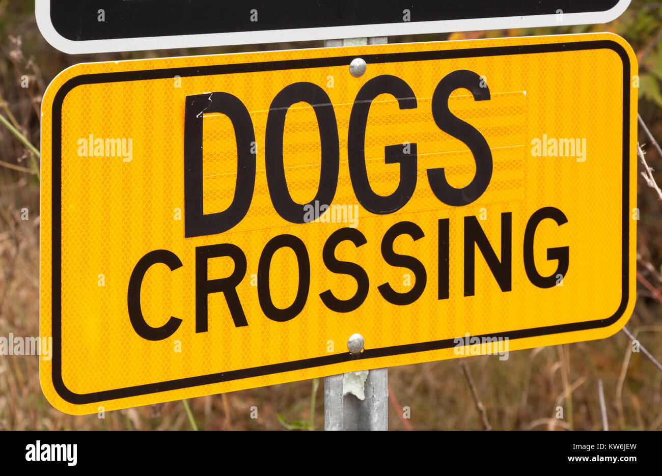 A reflective dogs crossing sign. - Stock Image