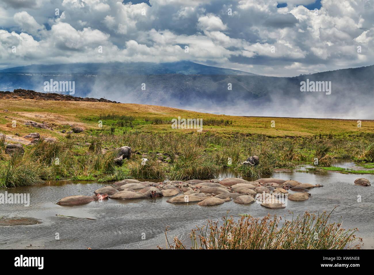 Hippopool in landscape of Ngorongoro Conservation Area, UNESCO world heritage site, Tanzania, Africa - Stock Image